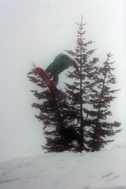 Snowboard treebonk #2
