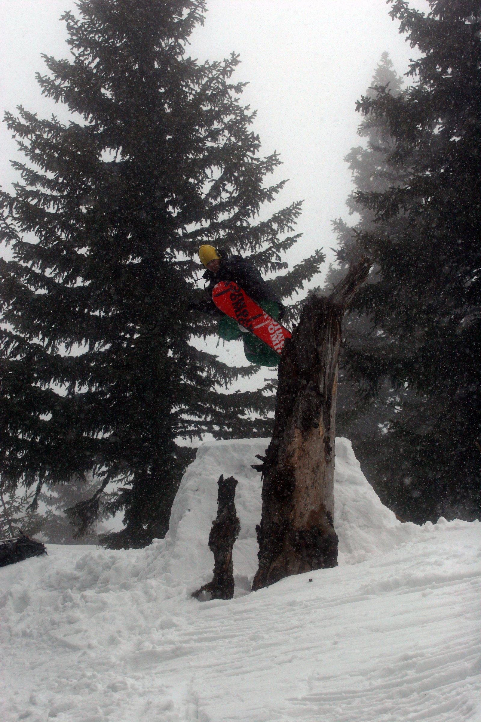 Snowboard treebonk #3