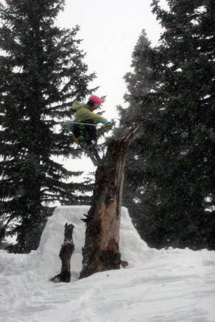Treebonk #2