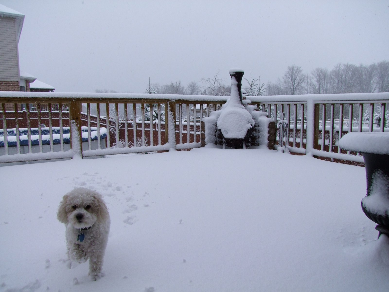 Snow in Ontario - 4 of 5