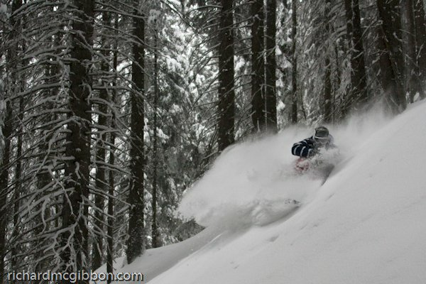 Skye Darden slashing some pow in the creepy trees in austria