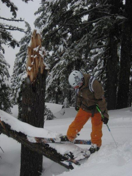 Tree jib