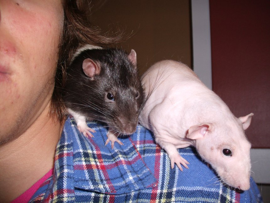 My two park rats
