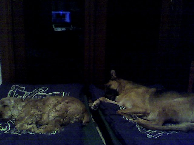 My pets :)