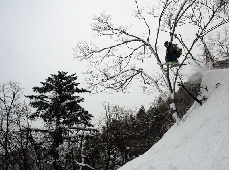 Kool ass tree Gap