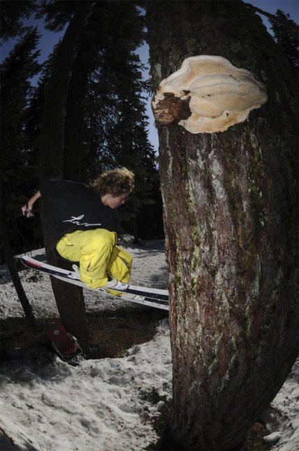 Back Tree Tap