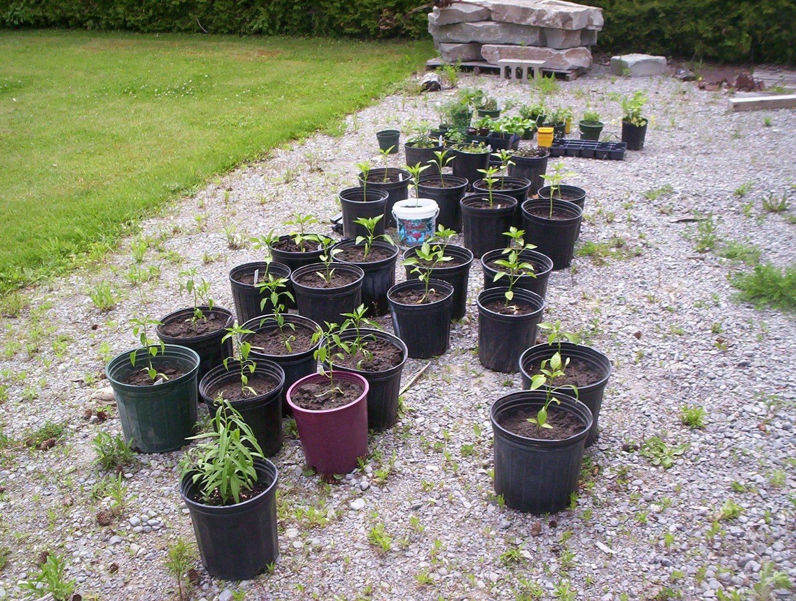My beginner pot garden
