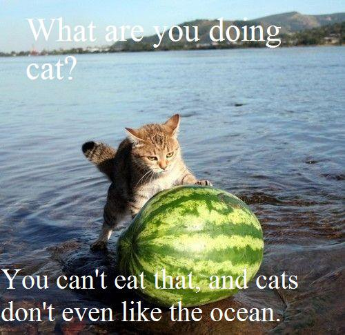 A cat rolling a watermelon out of the ocean.