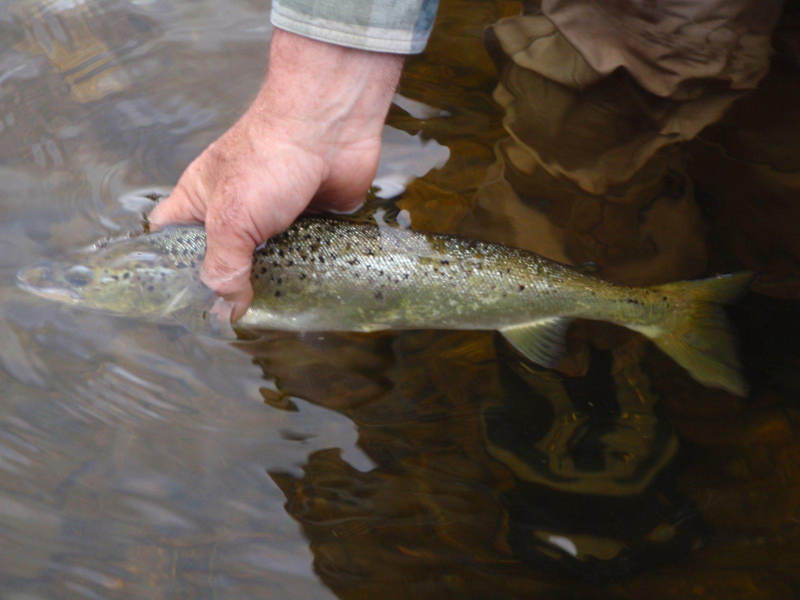 Landlock salmon
