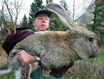My smelly old grandpa, and my pet rabbit BLOOMBERG!!!!!!!
