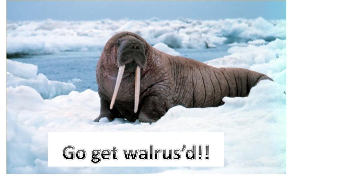 Death by walrus