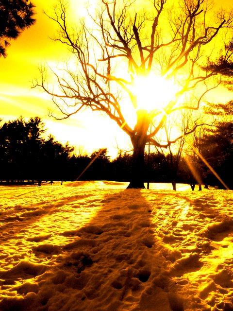 Fiyaa tree