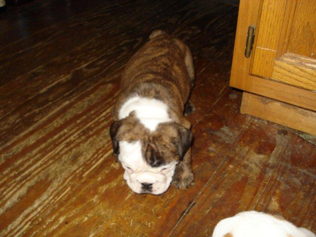 New pup :)
