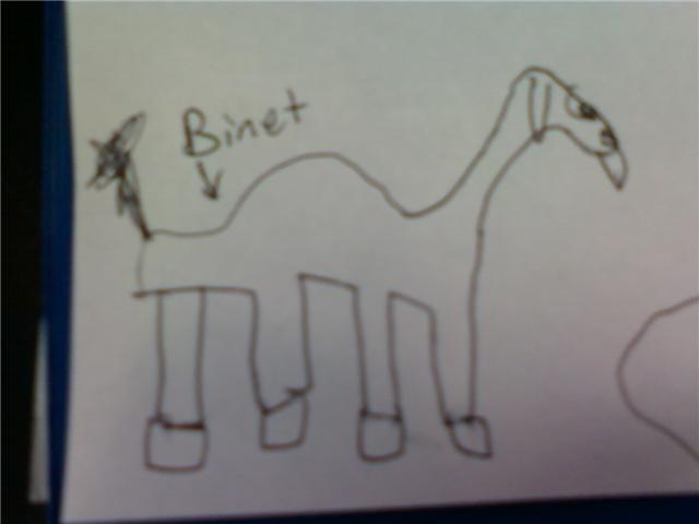 Binet the psychology camel