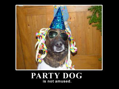 Party dog is not amused!