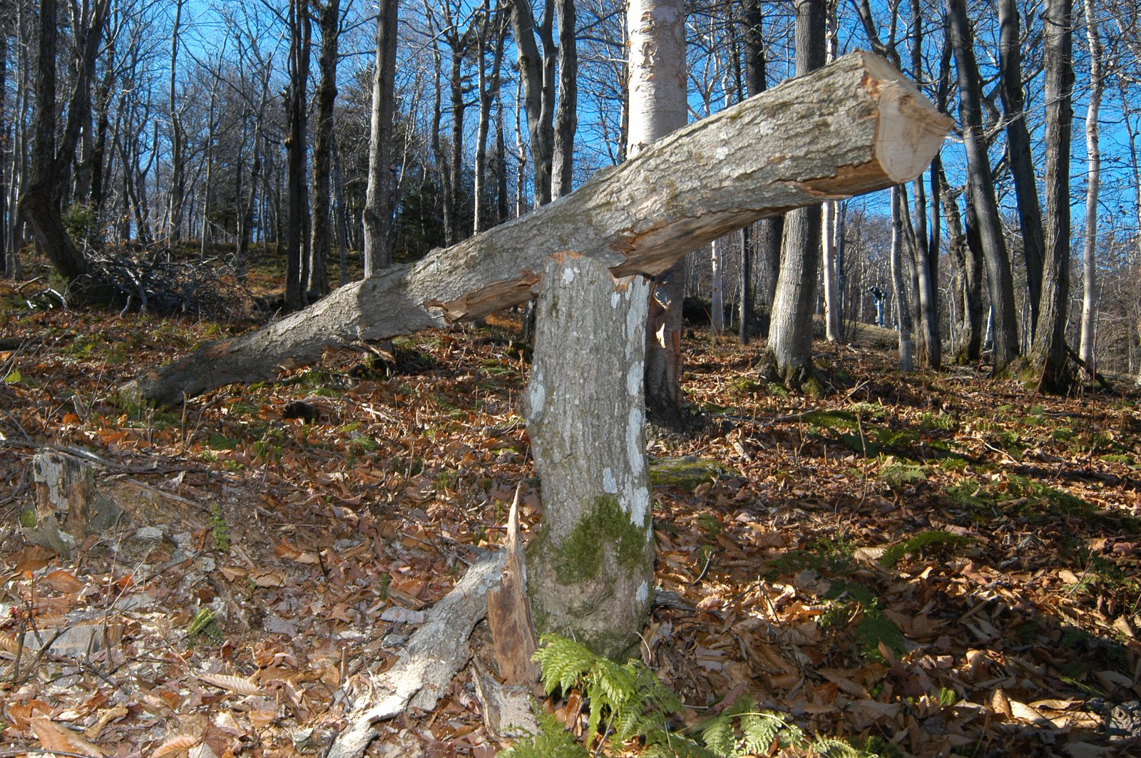One of the many new features in the woods of Carinthia