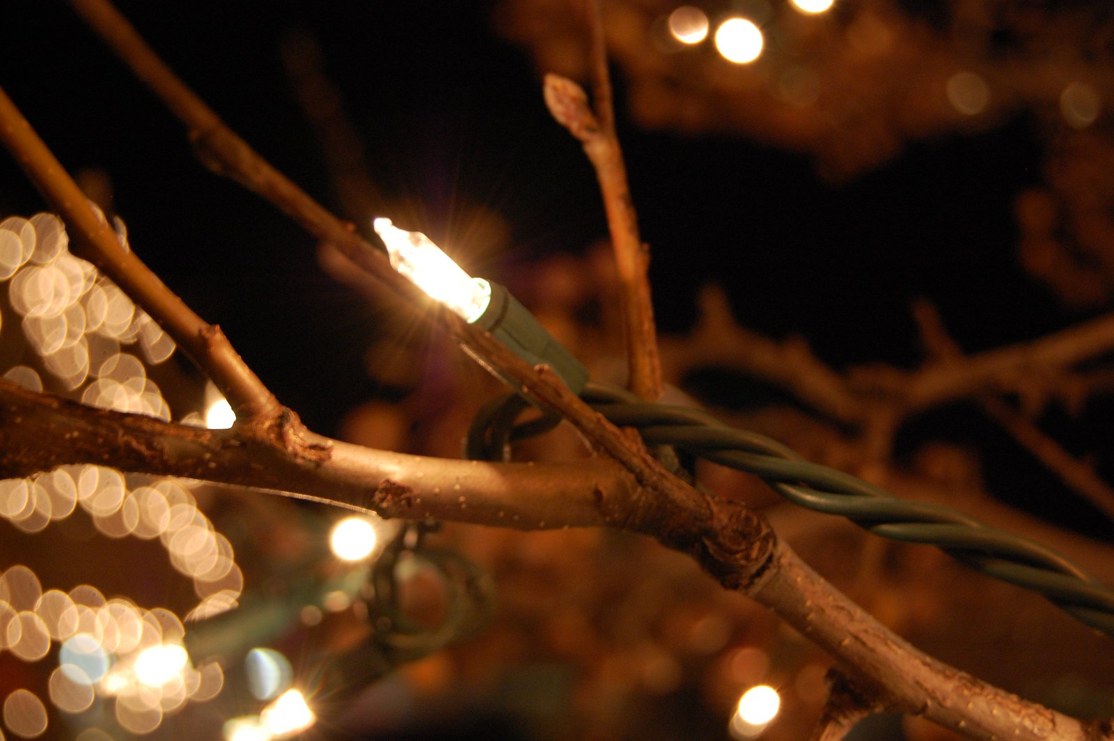 Christmas light (photo contest)