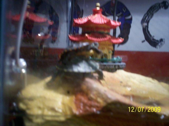 My turtles : )