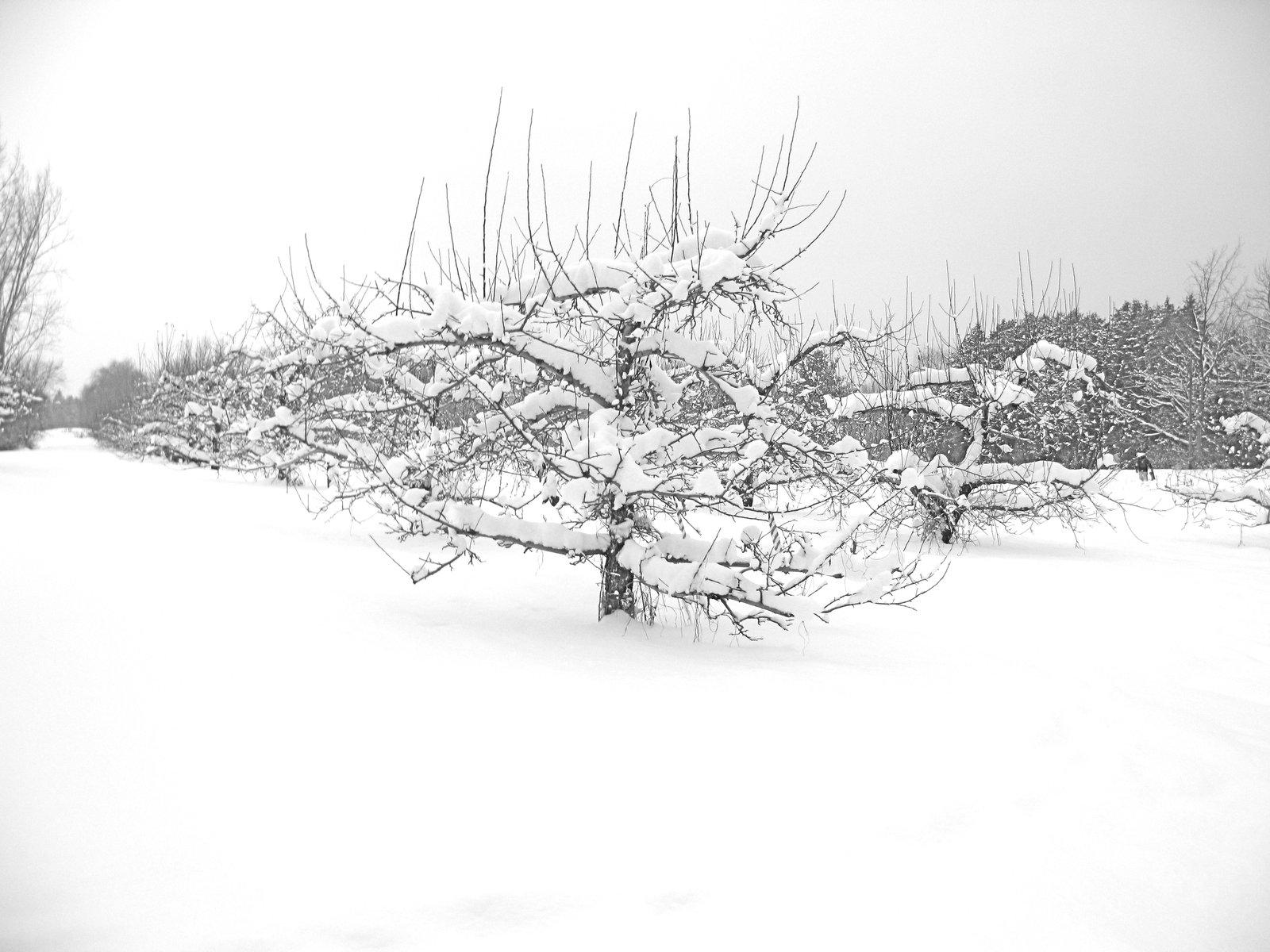 Individual Tree 1/22/10
