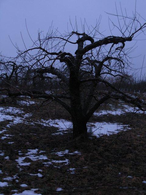 Individual Tree 1/24/10