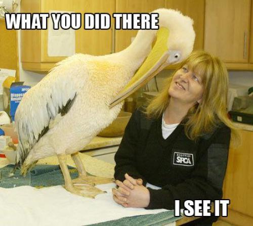 Pelican-Sees-It