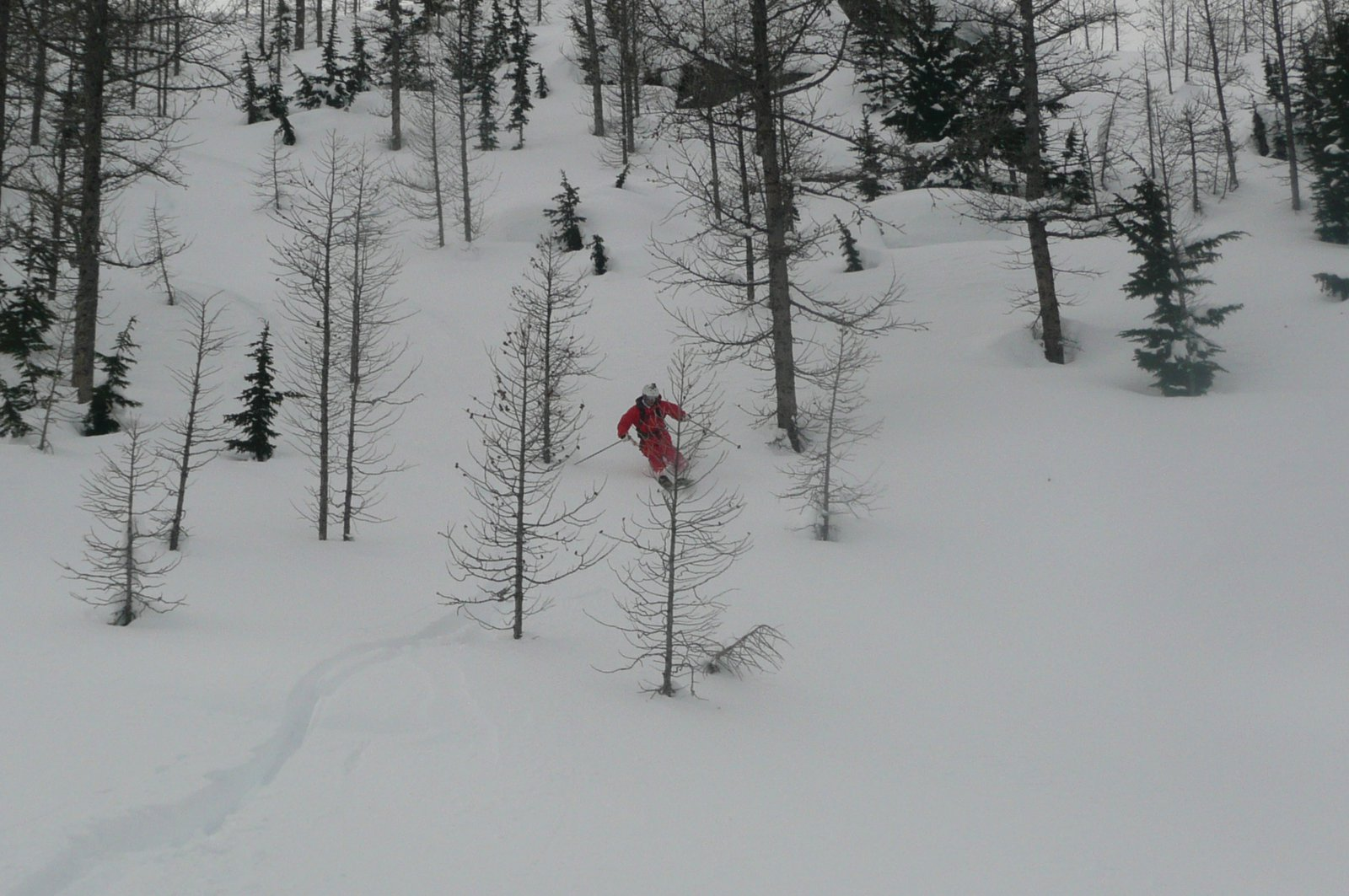 Some pow in the trees