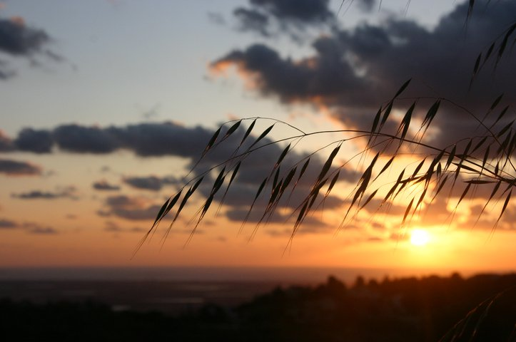 Sunset shot