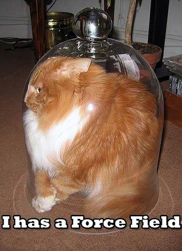 Force Field Cat