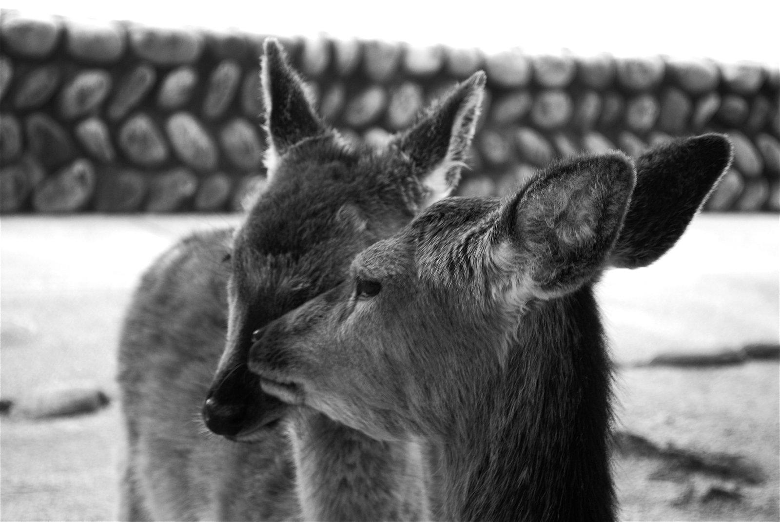Pic I took of deer in Japan