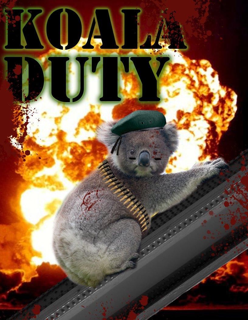 Koala Duty