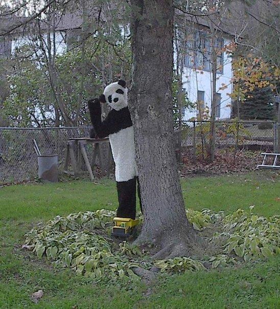 Catskill panda