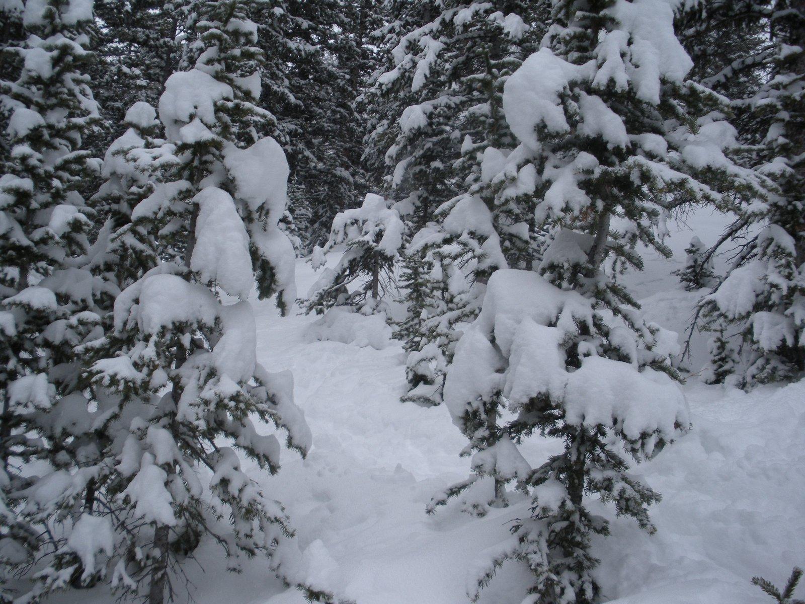 Powder in Aspen
