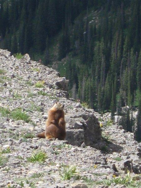 Marmot afterbang