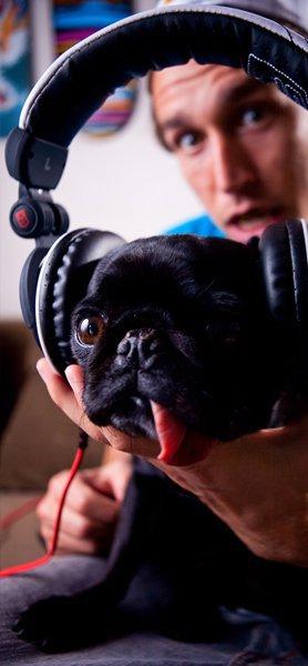 Siege Audio + Pug