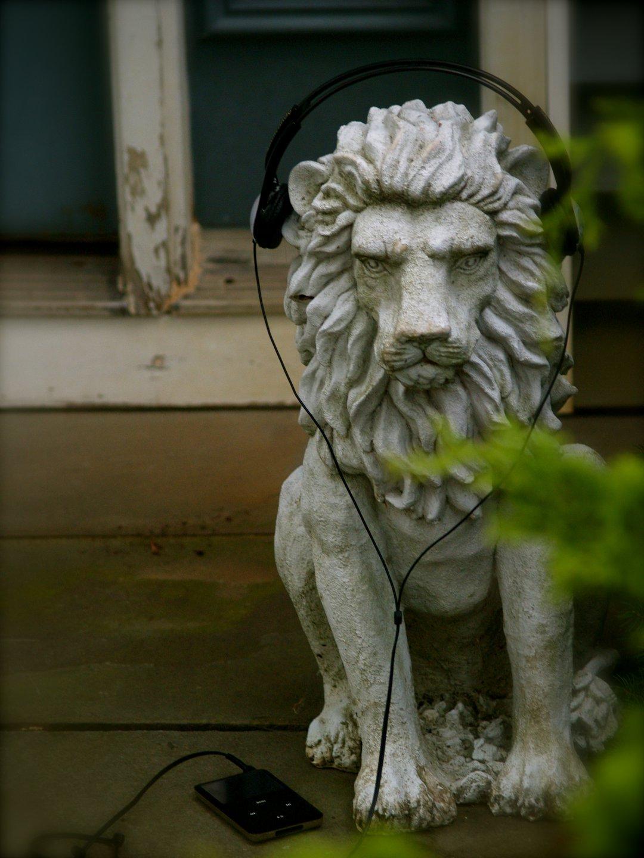Lions Roar.