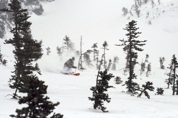 Powder 2008
