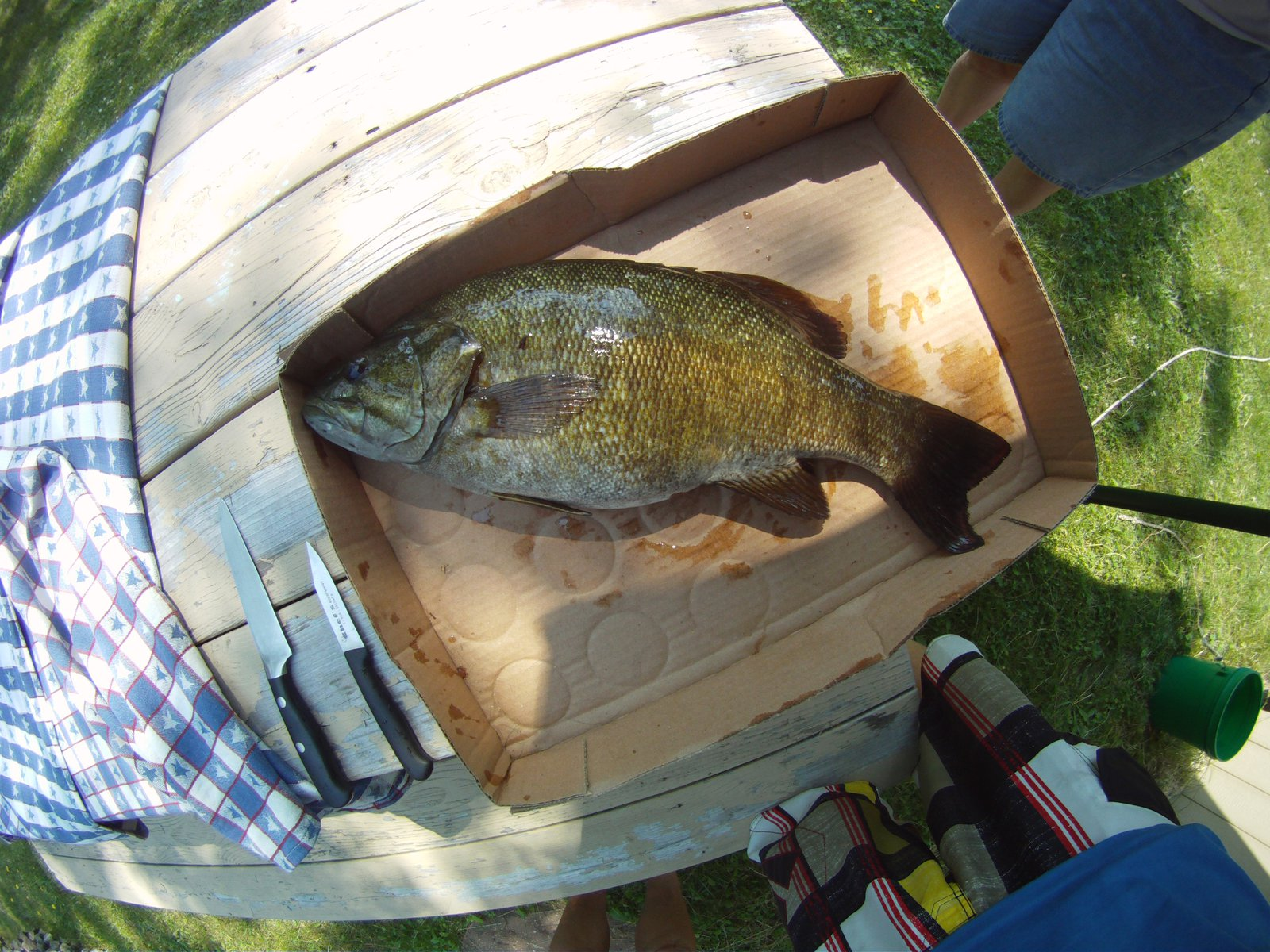 17 inch small mouth bass