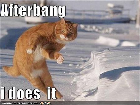 Cat a bangin