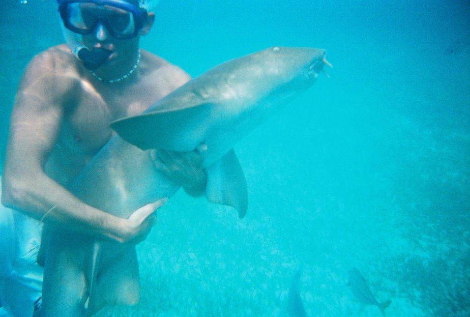 Shark Wrestling