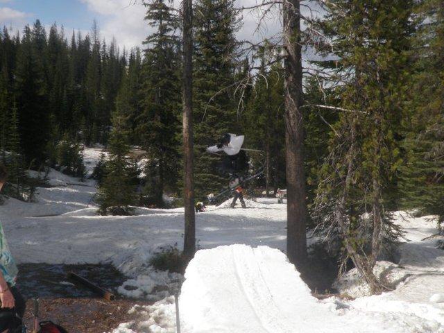 Tree/swamp gap