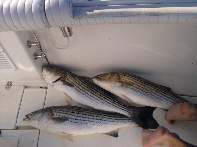I went fishing