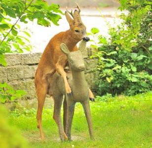 Oh deer oh deer.