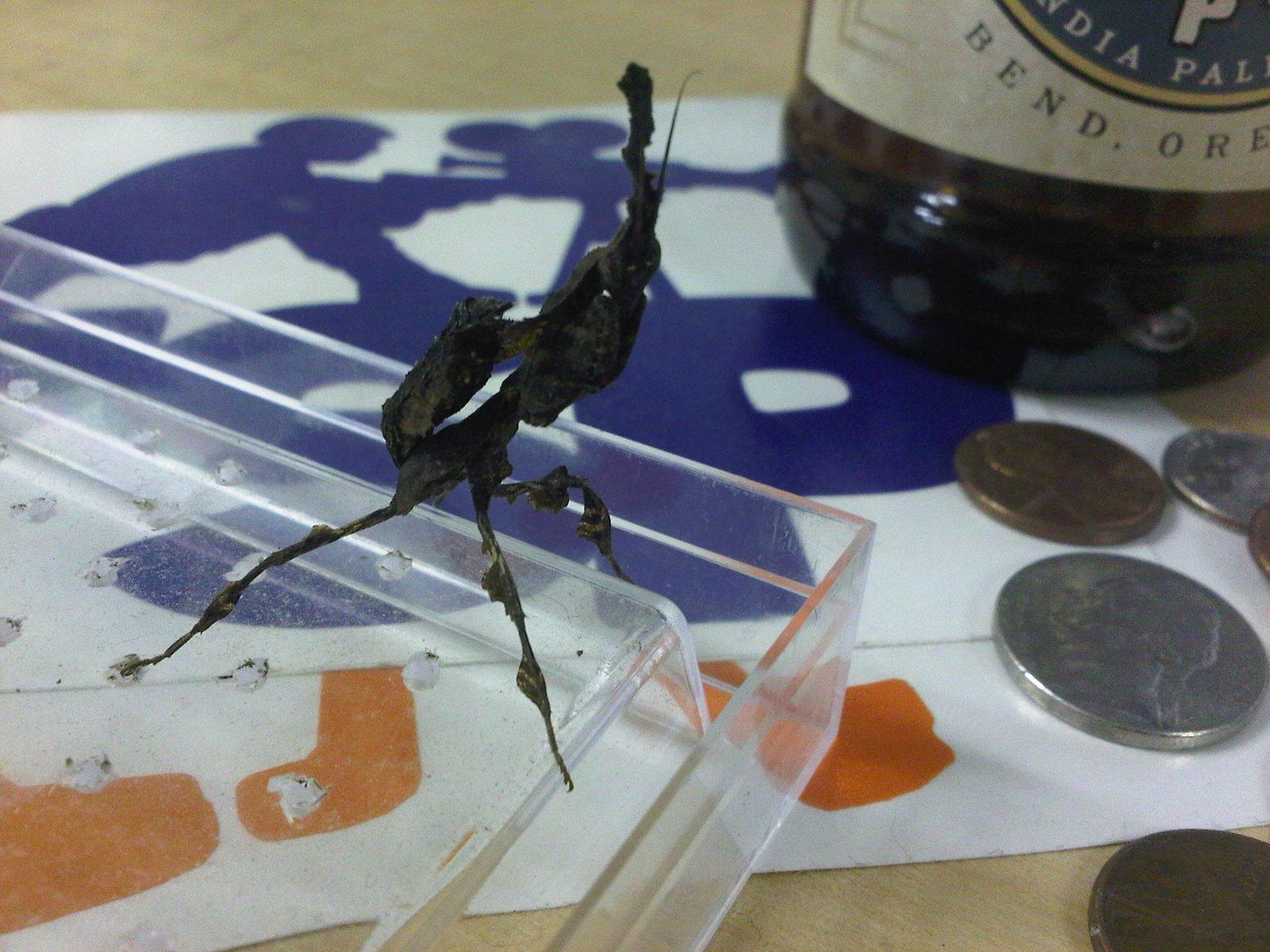 Office Mantis