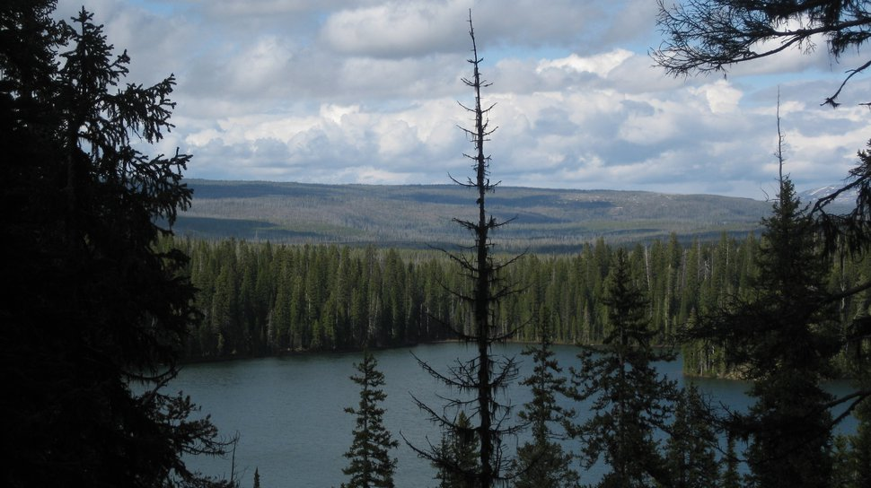 Lake of the Wood and yellowstone