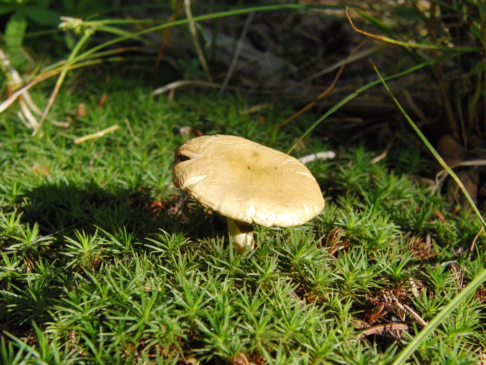 Mushroom and mosses.