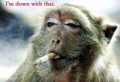 Chill monkey
