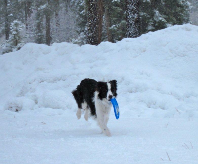 Snow frisbee