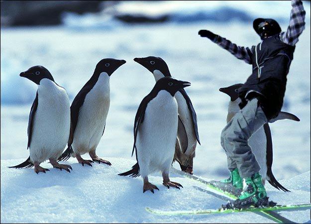 Dan is a Penguin