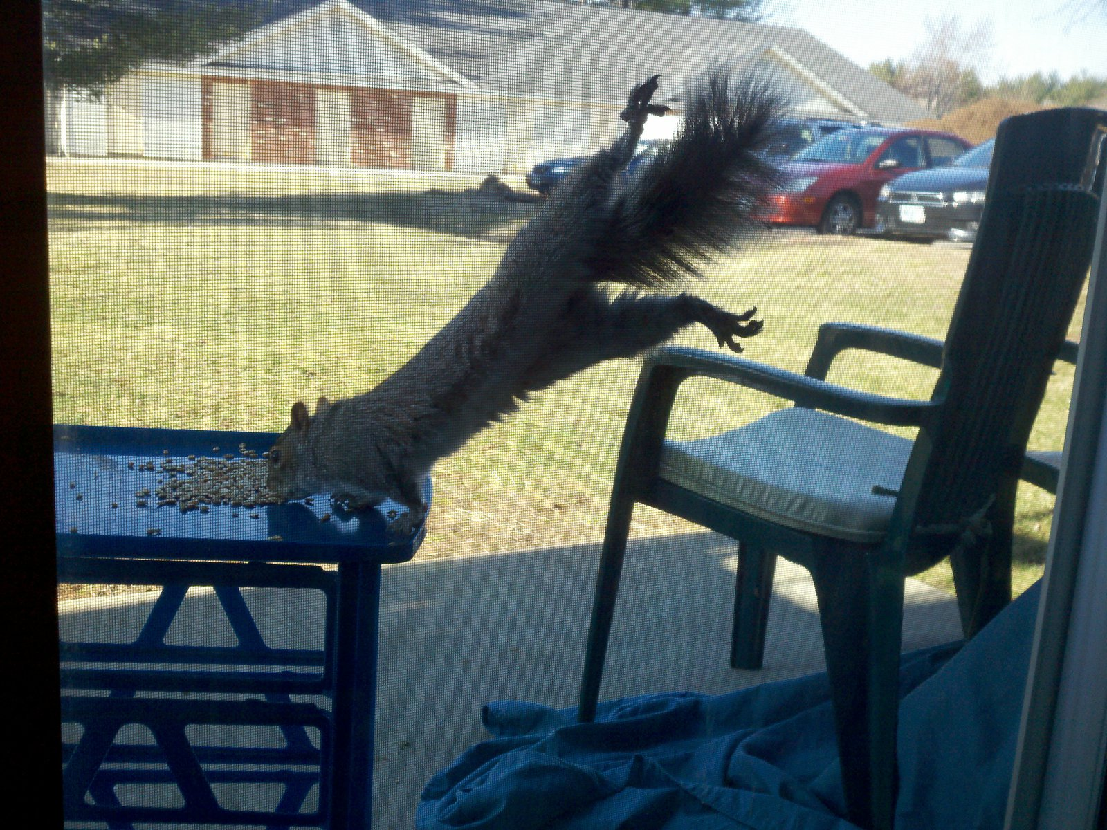 Squirrel is hungry
