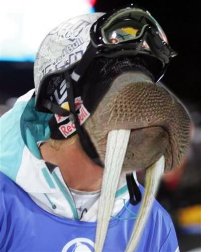 Walrus Skier